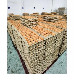 Wholesale eggs Chonburi