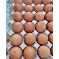 "Farm eggs-Egg Farm ""Yoo Sung Fresh Eggs"" wholesale source of chicken eggs"