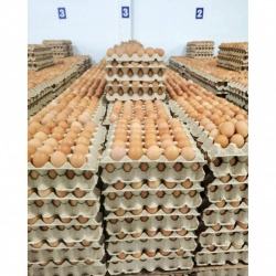 Wholesale source of chicken eggs
