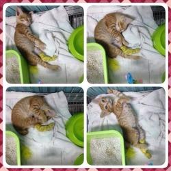 โรงพยาบาลสัตว์หมาแมวเลิฟลี่_05