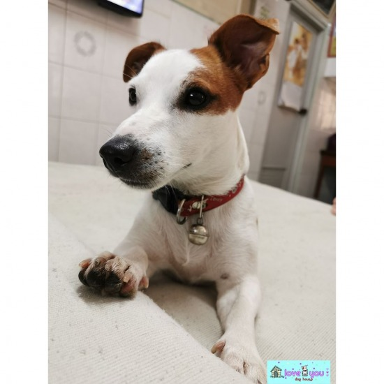 รับฝากสุนัขไม่ขังกรง ฝั่งธนบุรี รับฝากสุนัขไม่ขังกรง ฝั่งธนบุรี