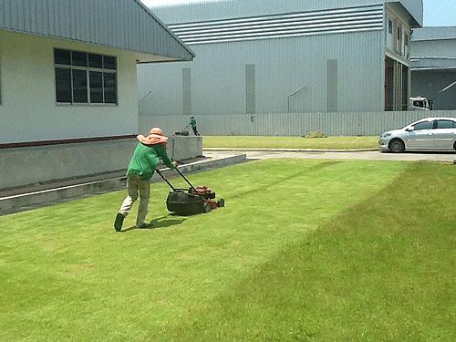 งานบริการตัดหญ้าดูแลสนาม