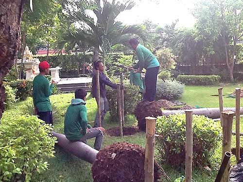 งานจัดสวน